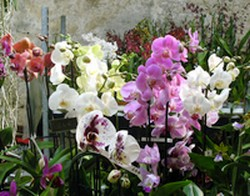 Orchids Abbey Fontfroide